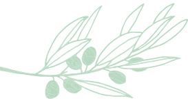 Light green Mary Kay skin care ingredient illustration of an olive oil plant